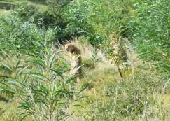 Can I help you Cheetah